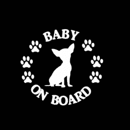 Baby Chihuahua on Board Sticker