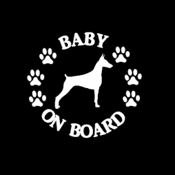 Baby Doberman Pinscher on Board Sticker