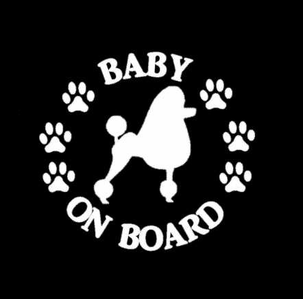 Baby Poodle on Board Sticker